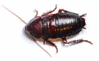 cockroach on white space