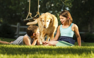 Boy and girl playing with dog outside