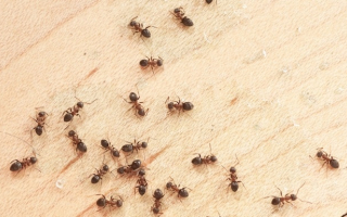 Ants crawling around